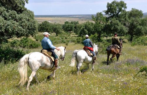 Rutas A Caballo Por El Campo Charro Y Sierra De Francia